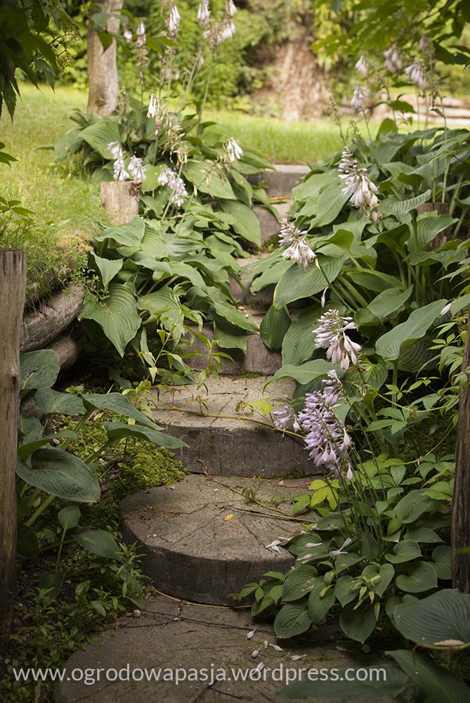 Kolejne miejsce gdzie hosty znalazły dla siebie miejsce, a na drewniane schody nieśmiało wdziera się winobluszcz pięciolistkowy