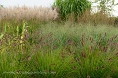 trawy_ozdobne_008