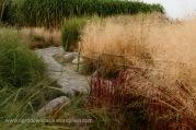 trawy_ozdobne_011