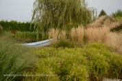 trawy_ozdobne_015