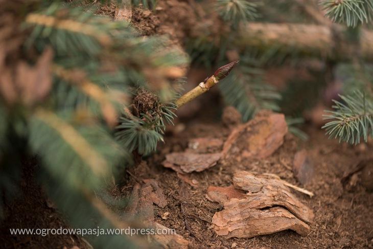 zimowe okrywanie roślin
