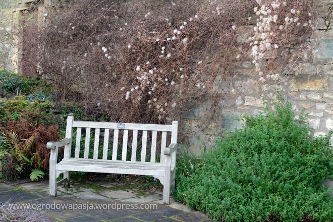 Arboretum w Edynburgu