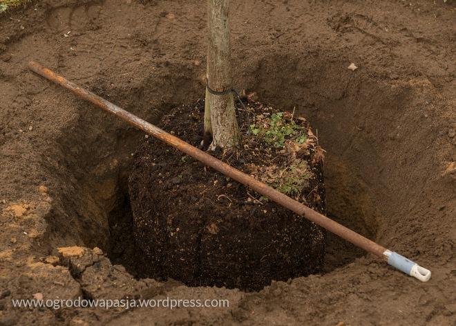 Przymiarka czy aby na pewno wszystko się zgadza i czy drzewo stoi prosto