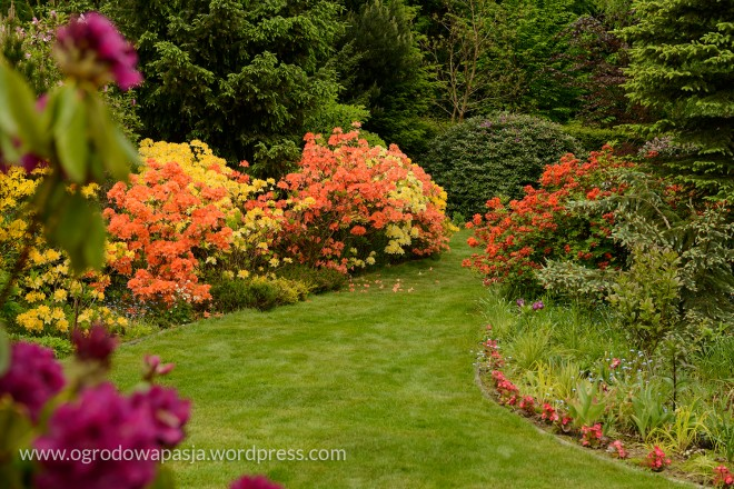 rododendron_029