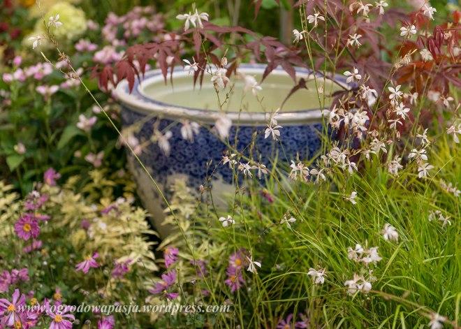 A tutaj roślina, która zawładnęła w tym roku moim ogrodem i moim sercem: Gaura Lindheimeri - tutaj w odmianie 'Whirling Butterflies'