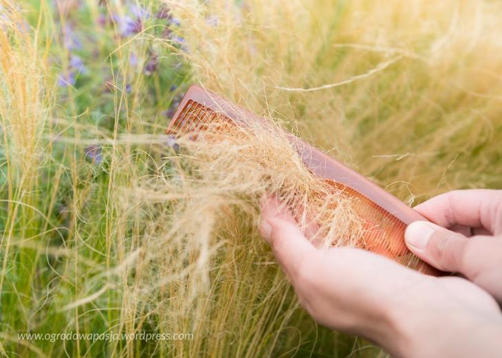 wyczesywanie trawy