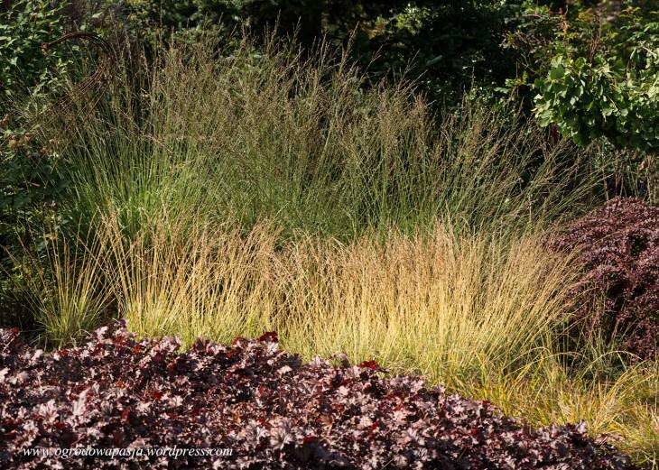 Molinia caerulea 'Variegata', (Molinia arundinacea 'Karl Foerster', Heuchera 'Blackberry Jam'